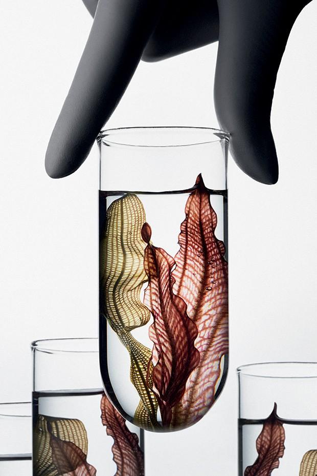 Beleza Probioticos (Foto: Trunk Archive)