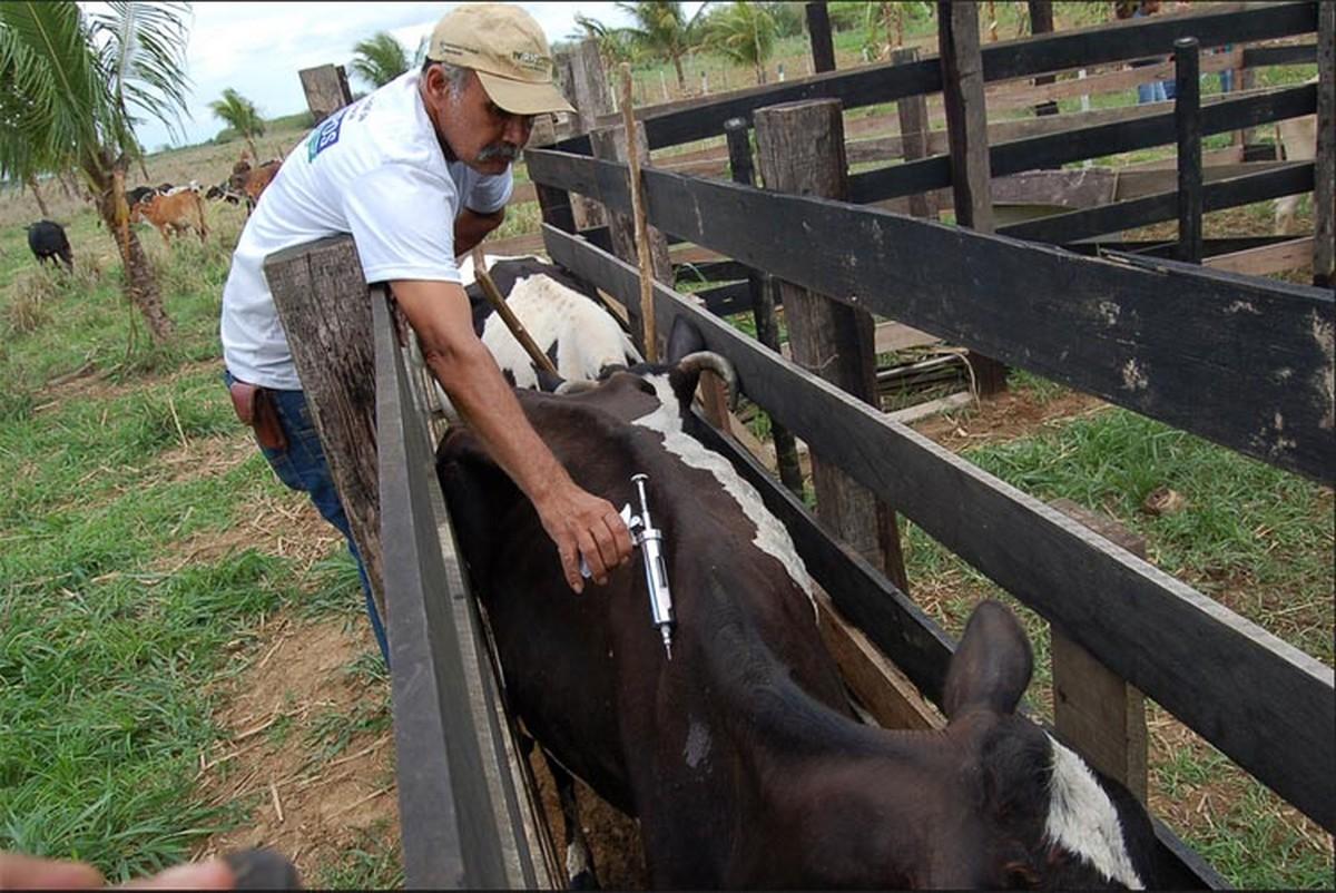 Segunda etapa da vacinação contra febre aftosa começa nesta quarta em Campos, no RJ