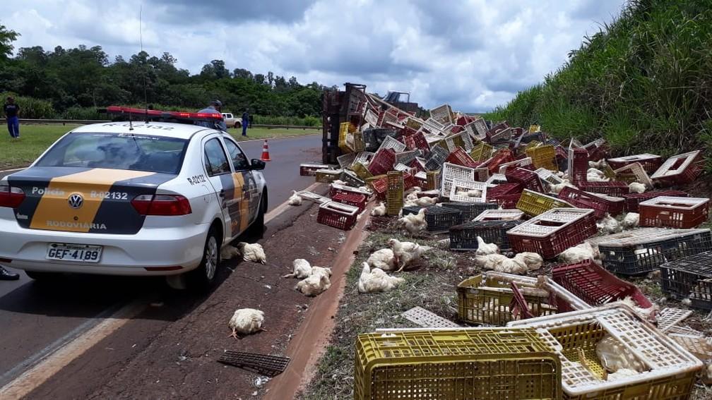 Título principal * Caminhão carregado com galinhas tomba na SP-255 sentido Barra Bonita — Foto: Divulgação/Polícia Rodoviária