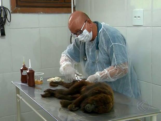 Macaco bugio é encontrado ferido no Bairro de Lourdes em Juiz de Fora (Fot Reprodução/TV Integração)