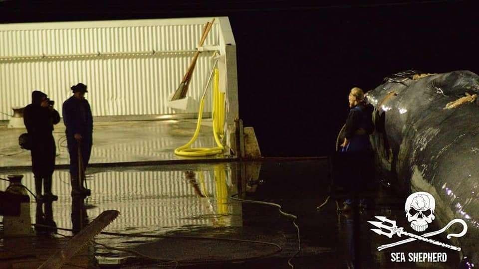 Caçadores tiram fotos ao lado de baleia morta (Foto: Sea Sheperd)