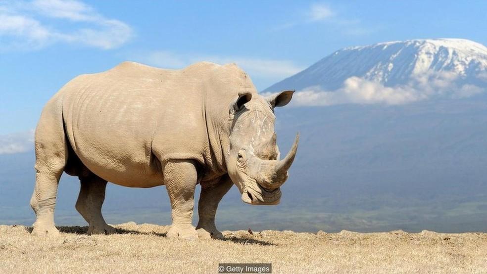 Muitas espécies estão hoje ameaçadas de extinção  (Foto: Getty Images)