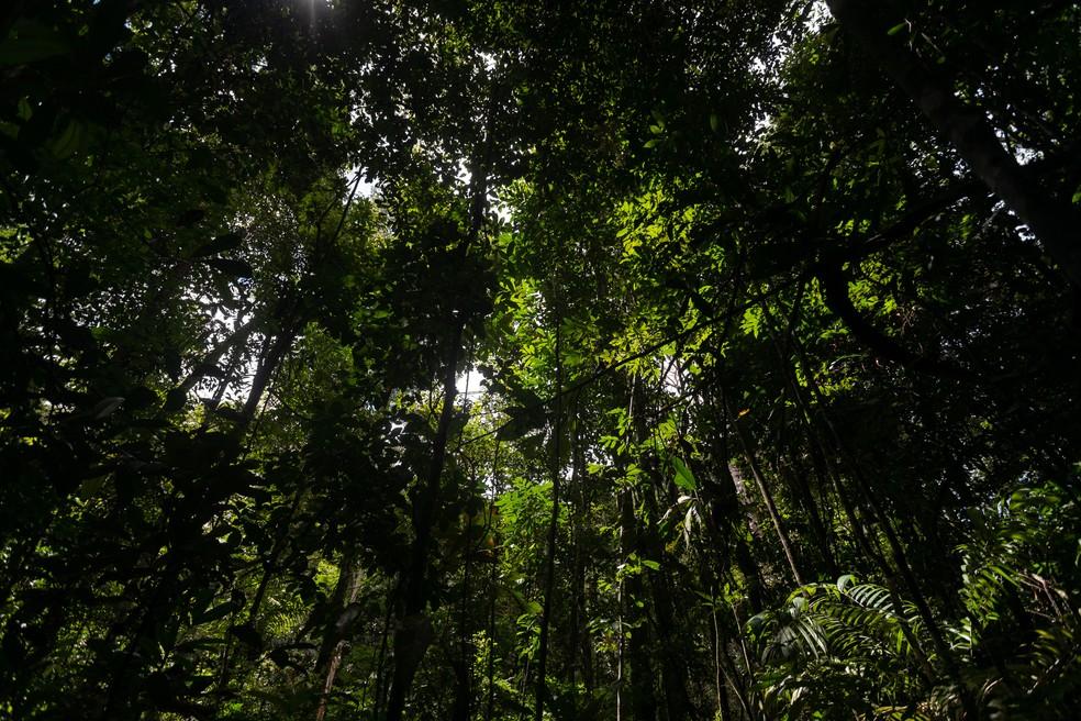 Vegetação da Amazônia na área da Floresta Nacional do Tapajós, no Pará — Foto: Marcelo Brandt/G1