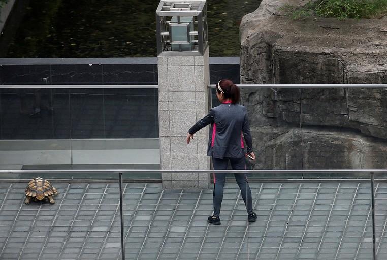 Mulher foi flagrada passeando com tartaruga de estimação em Xangai (Foto: Aly Song/Reuters)
