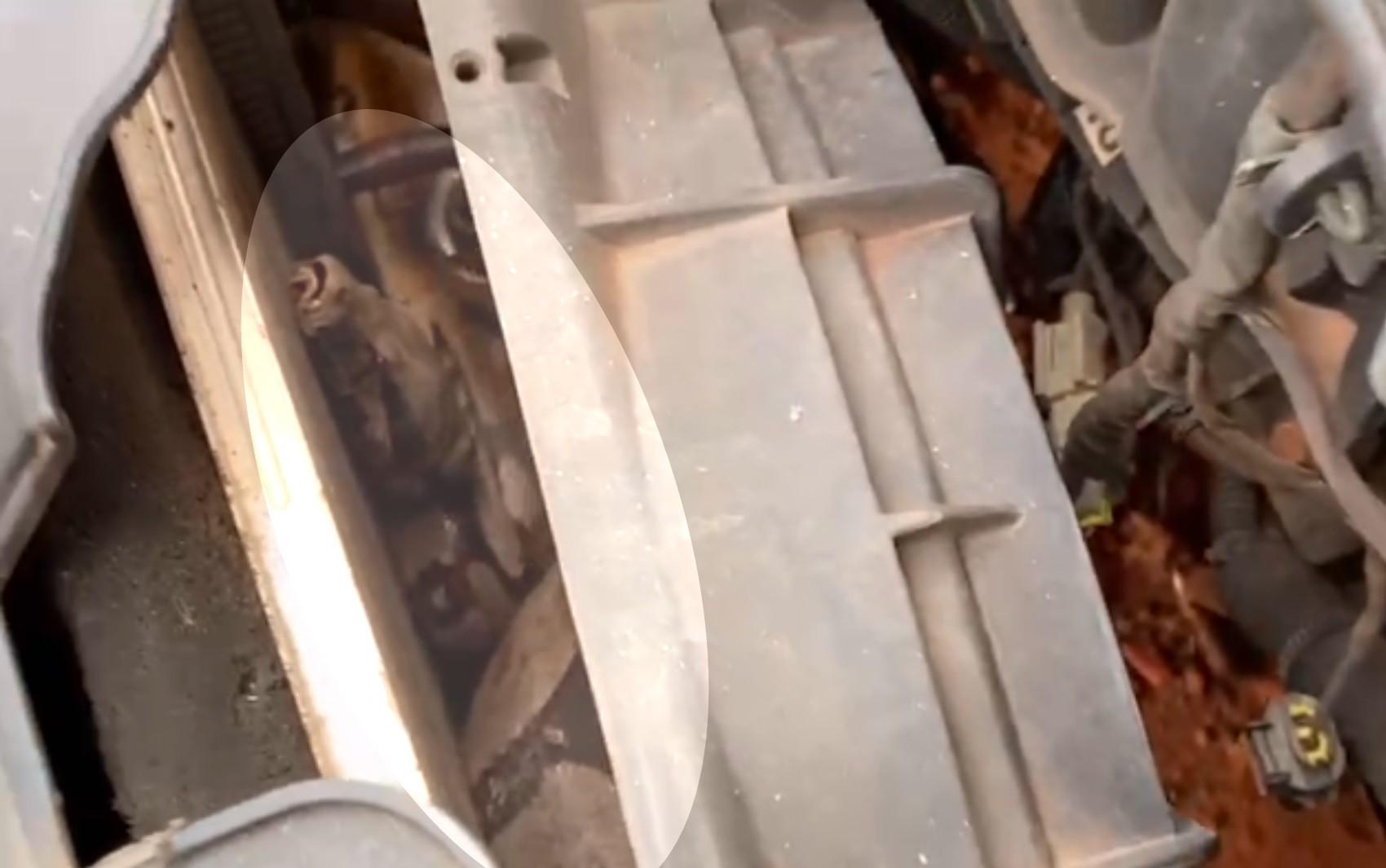 Bombeiros resgatam cobra de quase 2m em motor de carro, em Aparecida de Goiânia; vídeo