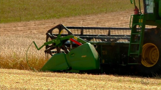 Safra do trigo de 2017 deve ser a menor em dez anos, estima Emater
