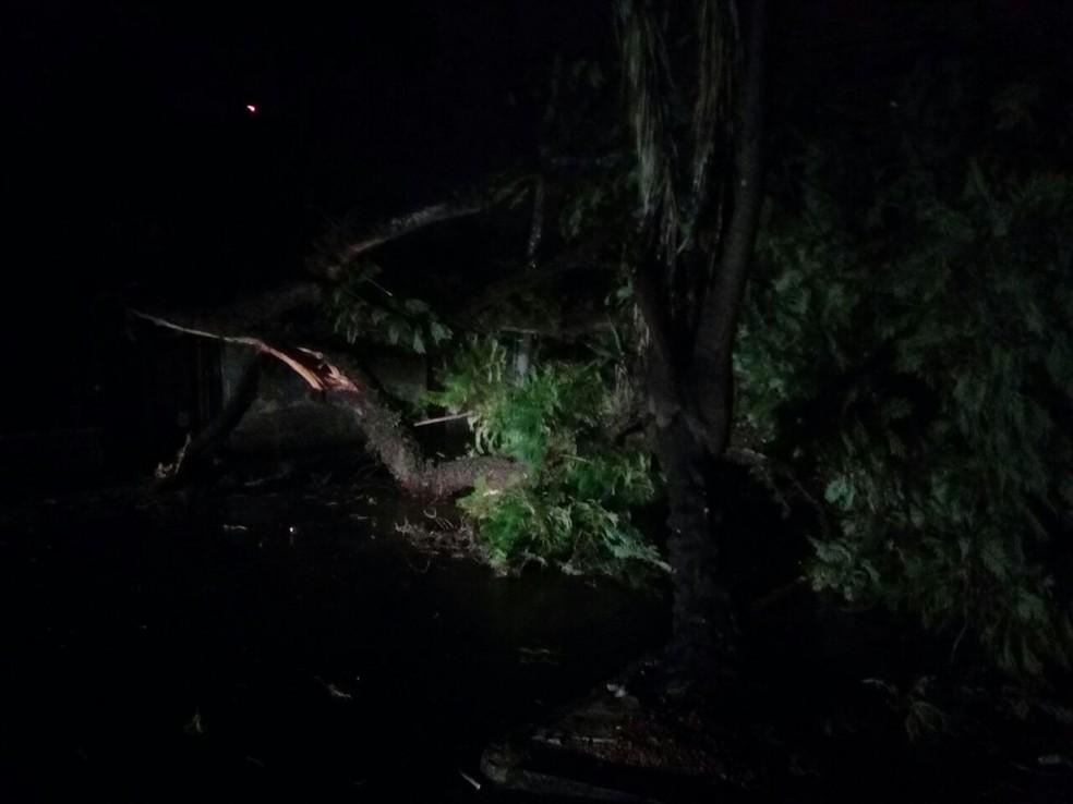 Árvore que caiu bloqueando totalmente rua em Porto Alegre (Foto: Estevão Pires/RBS TV)