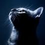 Papel de Parede: Kitten In The Dark