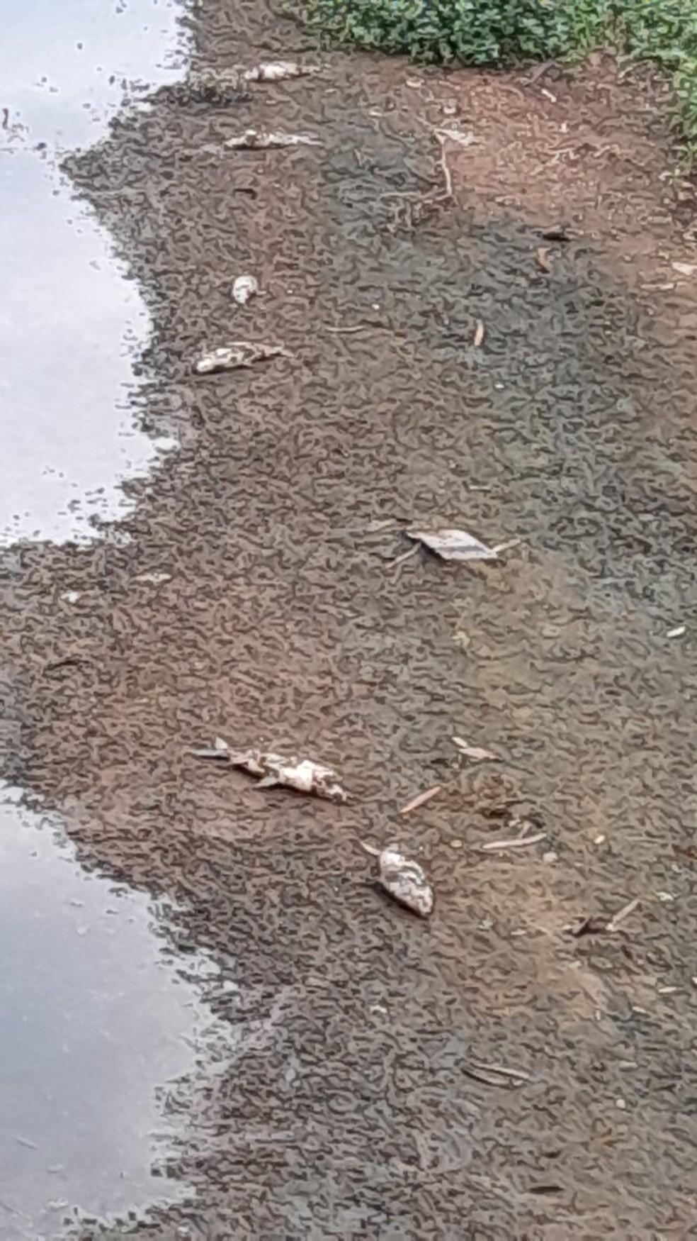 Moradores encontram peixes mortos boiando no Rio Sorocaba — Foto: Arquivo pessoal