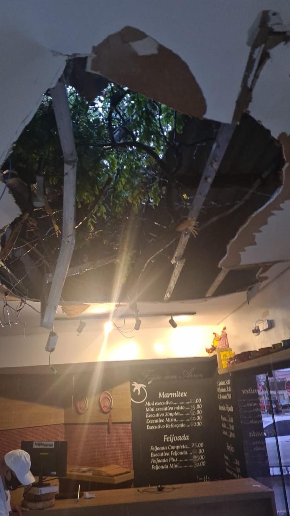 Árvore caiu em cima de restaurante por volta das 5h30 (de MS), diz proprietário — Foto: Redes Sociais/Divulgação