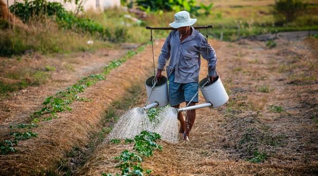 Produtor rural  (Foto: Pexels)