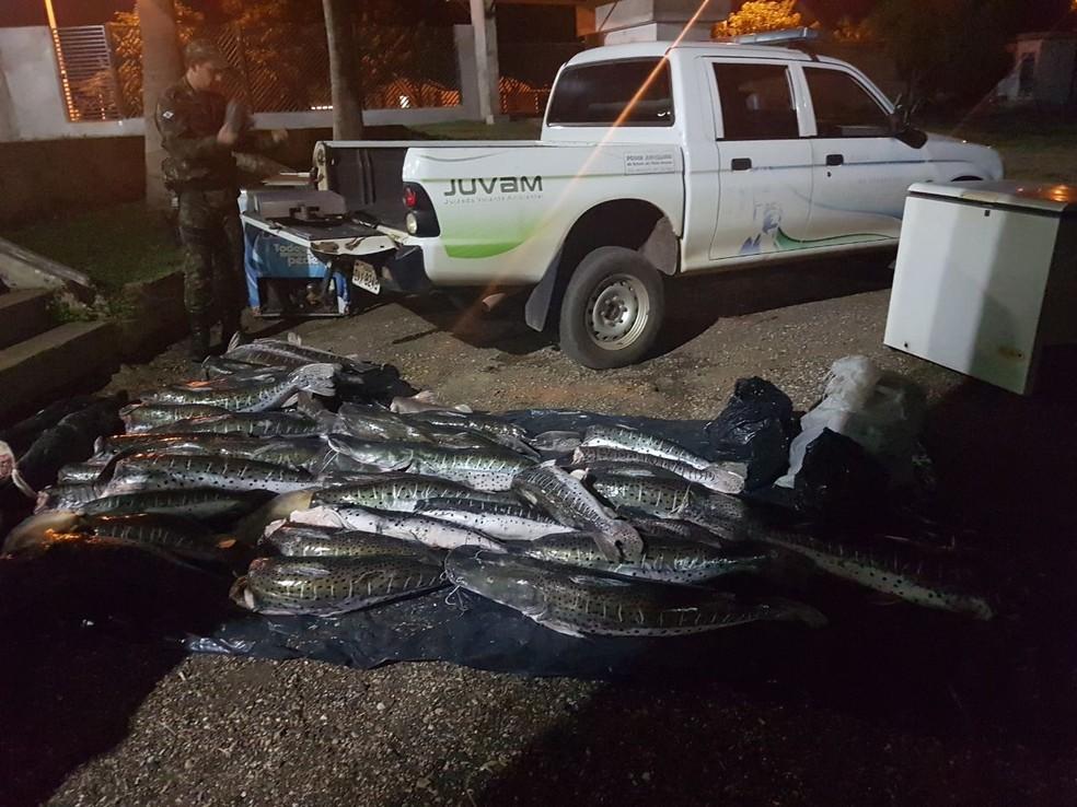 O pescado apreendido será doado para instituições filantrópicas (Foto: Polícia Militar de Rondonópolis)