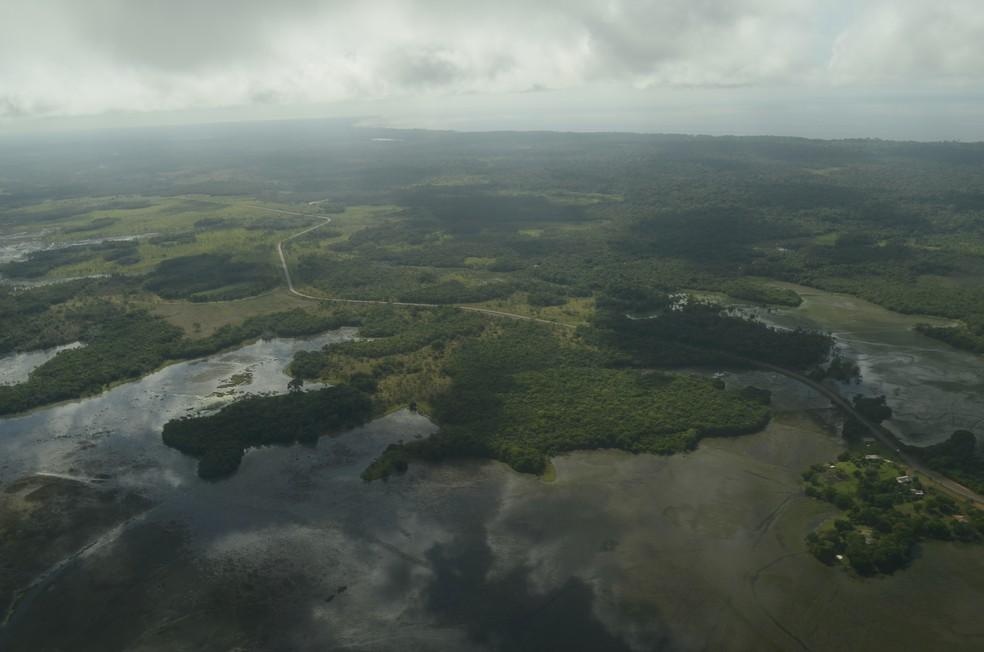 Floresta Amazônica, principalmente nativa, ocupa maior parte do território do estado — Foto: Abinoan Santiago/Arquivo G1