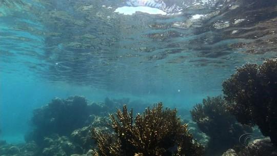 Mergulhador é suspeito de abusar sexualmente de turista nas piscinas naturais de Maragogi, AL