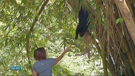 Dócil, macaco bugio sai da mata duas vezes ao dia para comer frutas e pão quentinho das mãos de moradores em MT