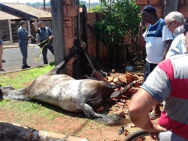 Cavalo morreu após atingir o muro  (Foto: Diego Pereira/ Mais Tupã)