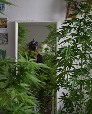 Elas exploram os benefícios da cannabis