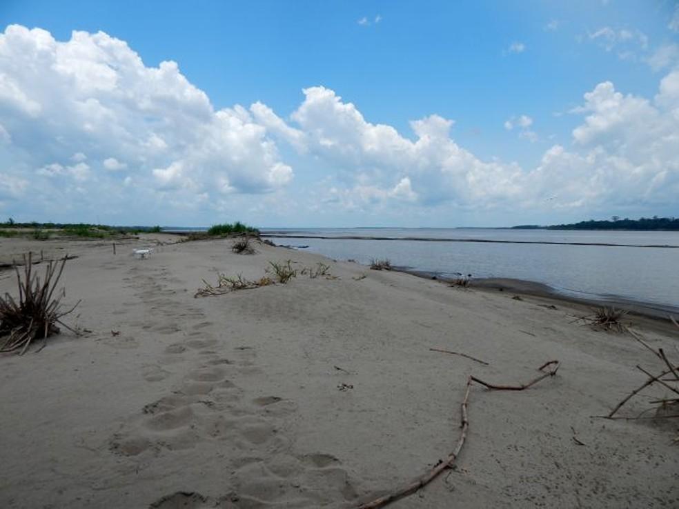 Praia é foco de desova — Foto: Marina Secco