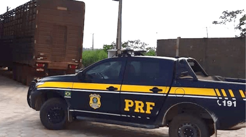 PRF apreende caminhão com 70 bois vivos em Altamira, no Pará