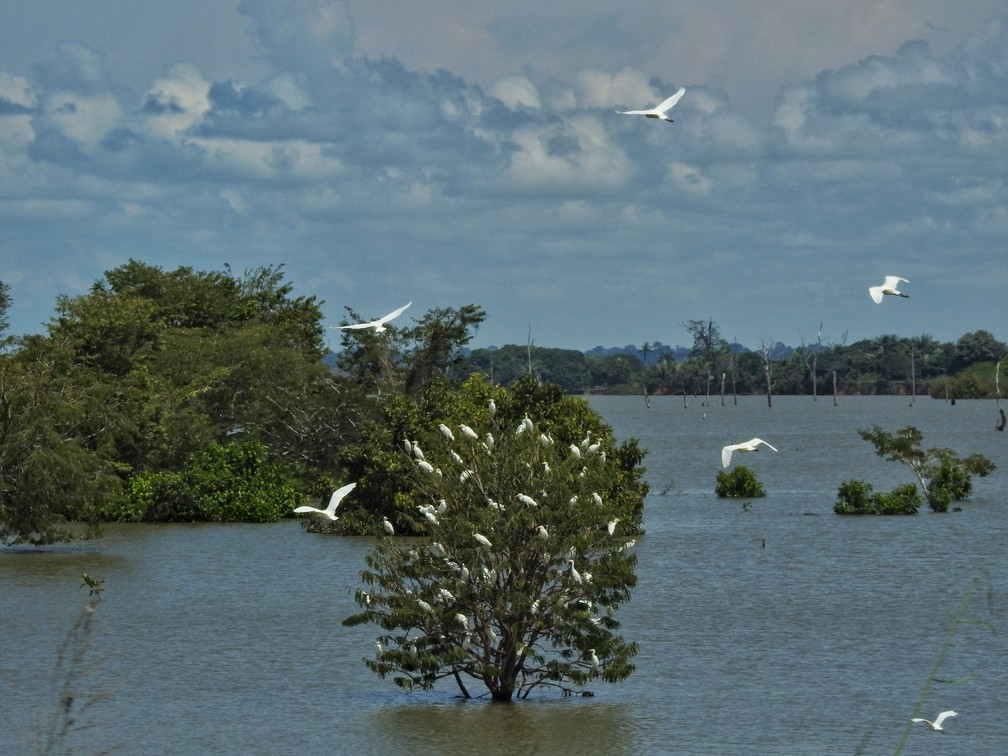 Garças na represa do rio Jamari, entre Candeias e Ariquemes — Foto: Renata Silva/Arquivo Pessoal