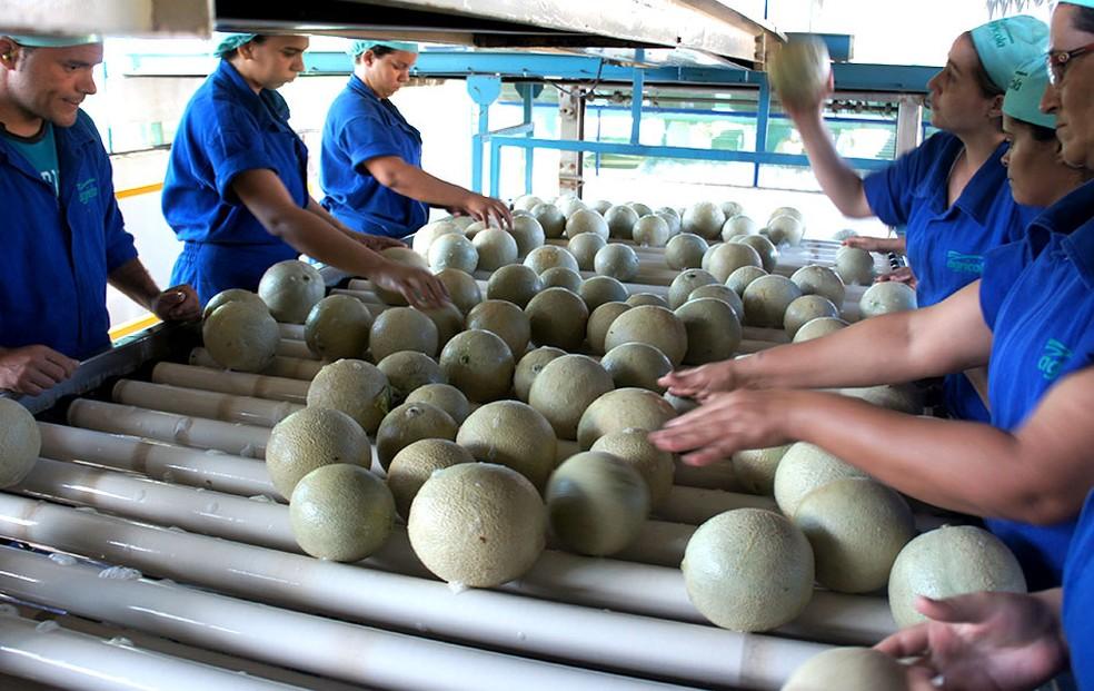 Empresário estimam criação de 40 mil empregos se acordo comercial para exportar melão para a China for concretizado — Foto: Anderson Barbosa/G1