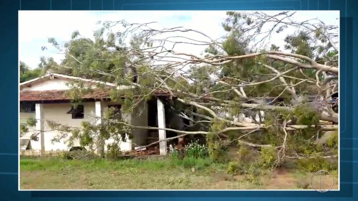 Árvore cai durante temporal e atinge casa em Cabo Frio, no RJ