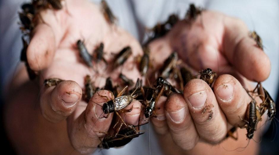 Nutrix criou farinha com larva de grilos para consumo humano (Foto: Divulgação)