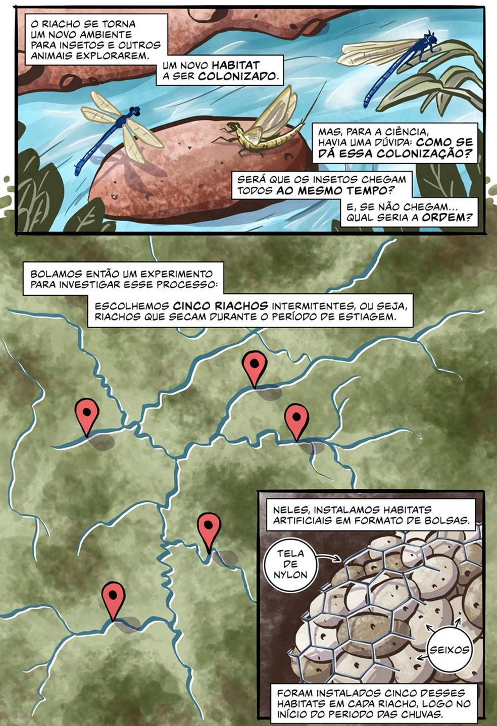 """""""Ciclos"""" - parte 2: história em quadrinhos ilustra e reconta os resultados de artigo científico sobre o ciclo de vida dos insetos — Foto: Divulgação/Luciano Queiroz e Marco Merlin"""