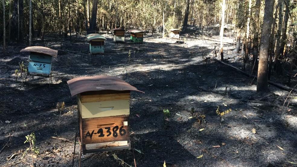 Com queimada na Serra do Japi, colmeias são atingidas em fazenda de Cabreúva— Foto: Arquivo Pessoal