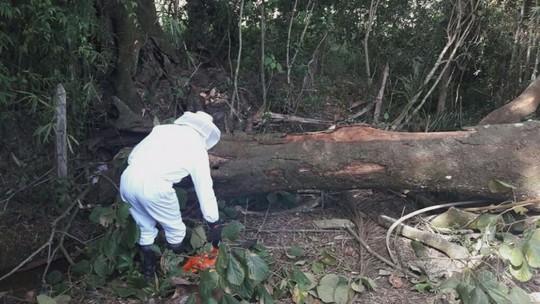 Homem de 35 anos morre após ser atingido por árvore em distrito de Conceição do Rio Verde, MG
