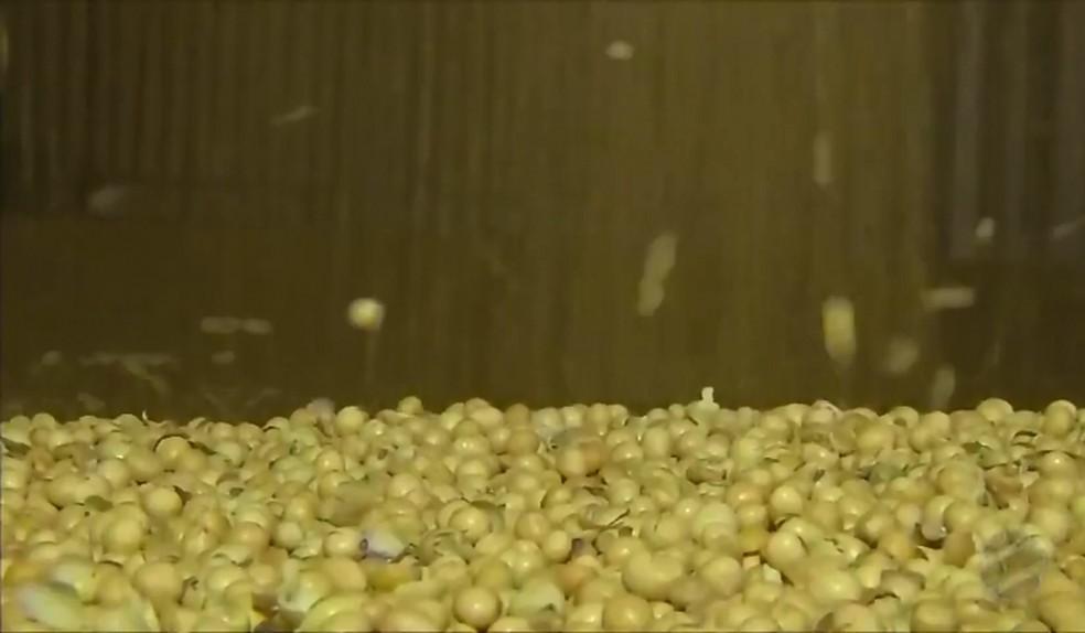 Grãos estão estocados em armazéns à espera de valorização — Foto: Reprodução/TVCA