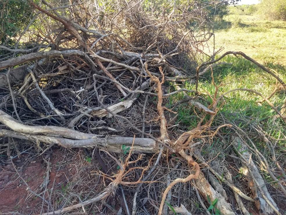 Homem foi autuado em R$ 2,4 mil por ter cortado árvores nativas — Foto: Polícia Ambiental