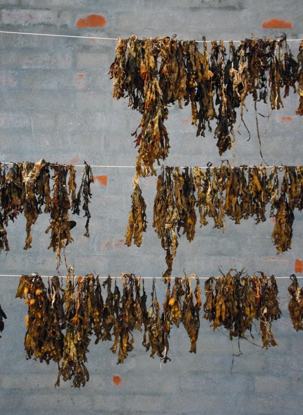 Processo. As algas são secas, trituradas, cozidas e misturadas a papel reciclado para criar objetos diversos (Foto: Nikolaj Steenfatt / Divulgação)