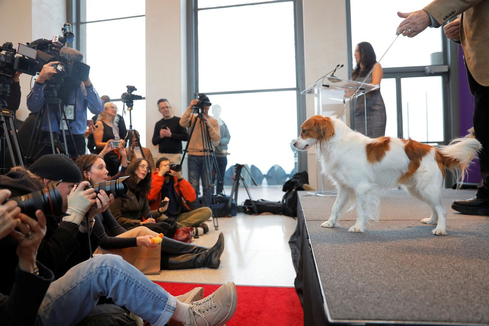 Nederlandse Kooikerhondjes é apresentado — Foto: Lucas Jackson/Reuters