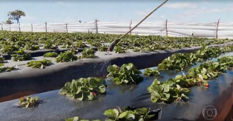 agricultura-plantacao-agrotoxico (Foto: Reprodução/TV Globo)