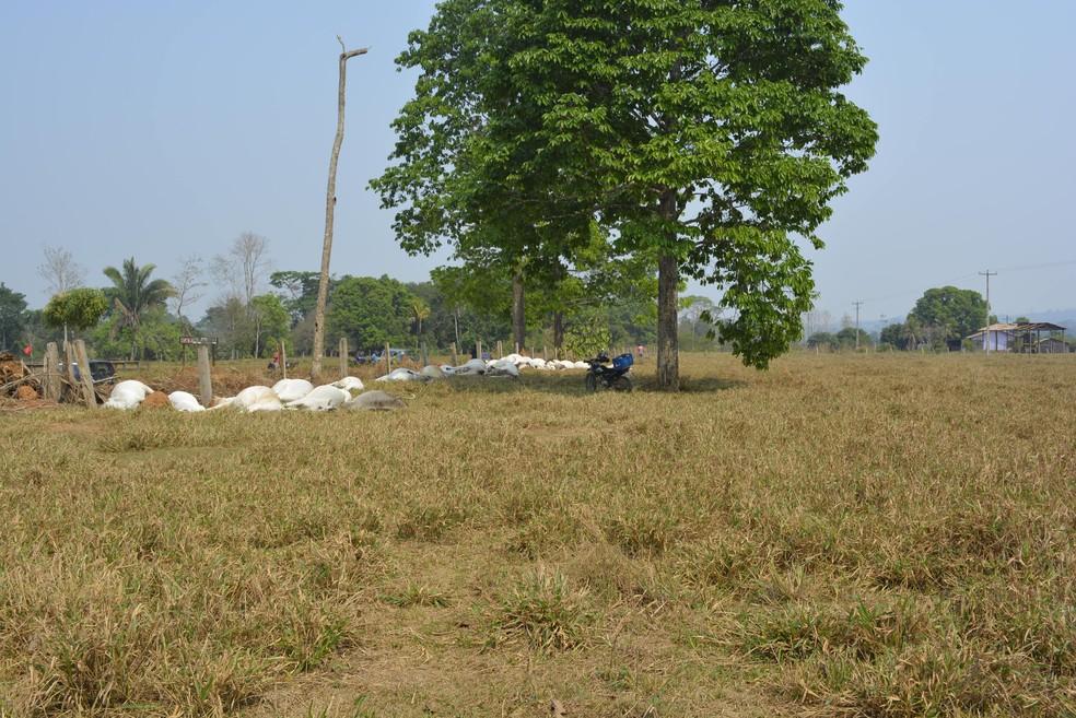Fio de energia caiu e espalhou eletricidade pelo local (Foto: Jeferson Carlos/G1)