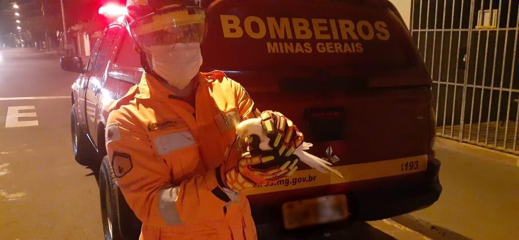 Calopsita é resgatada pelos bombeiros em rede elétrica, em Ituiutaba