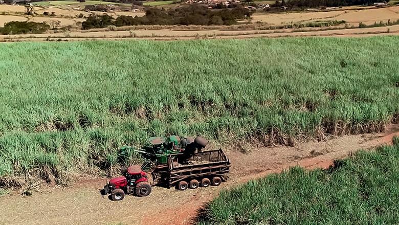 Vista do canavial da São Martinho (Foto: Reprodução/Programa Globo Rural)