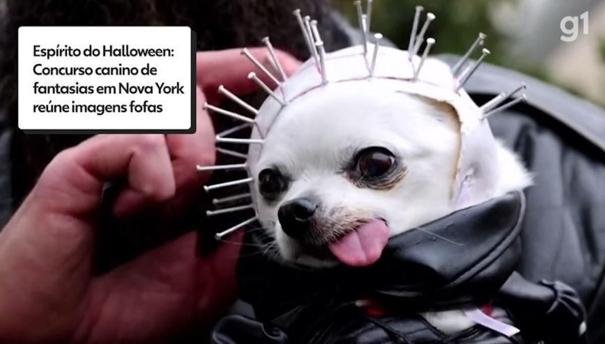 Concurso canino de fantasias em Nova York mostra o espírito do Halloween; veja vídeo