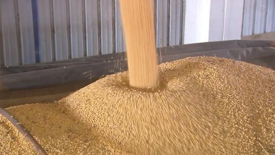 Aumento na cotação do dólar gera lucro e preocupação ao setor agro