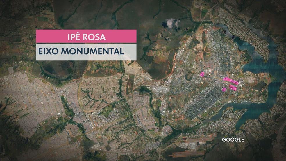 Projeto Zona Verde do DF Ipê Rosa — Foto: TV Globo/Reprodução
