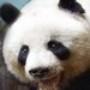 Quiz: Terra do Panda Gigante