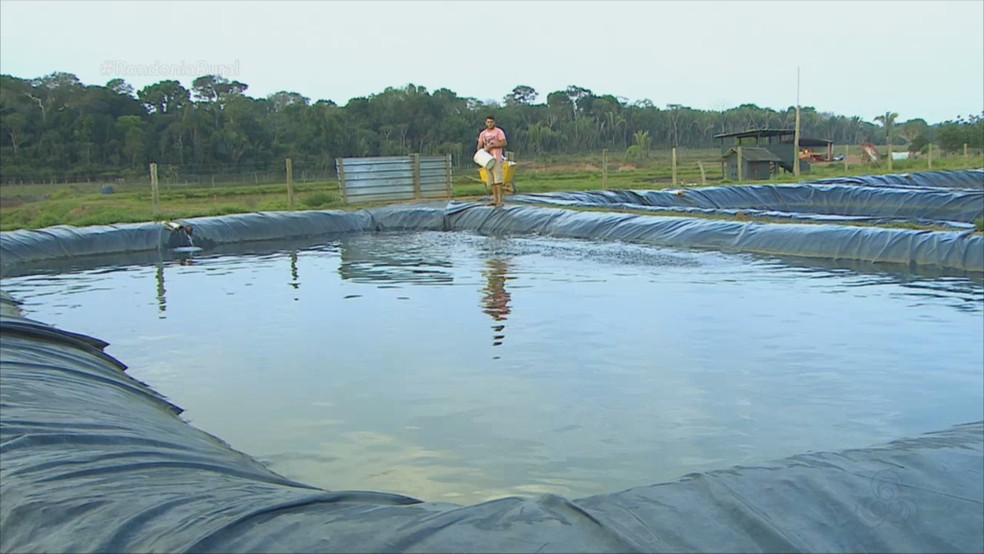 Engenheiro mede temperatura da água antes de tratar peixes — Foto: Rede Amazônica/Reprodução