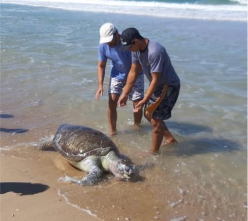 Ceará já contabiliza 23 tartarugas mortas após surgimento de manchas de óleo no mar - Notícias - Plantão Diário
