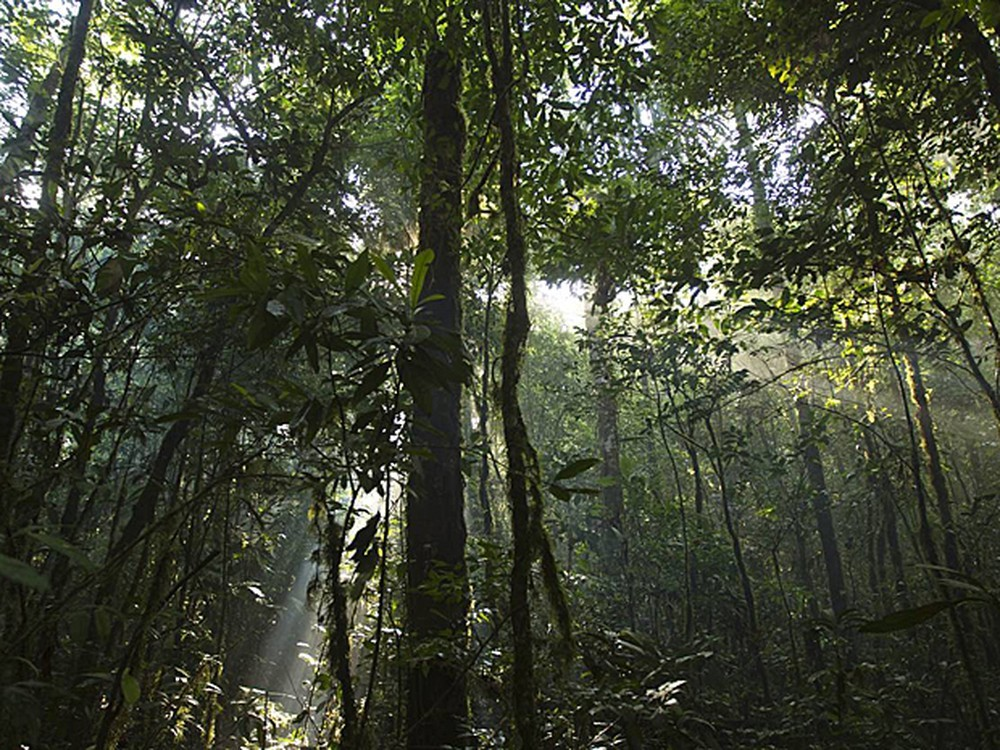 Livro sobre os mistérios da natureza na Amazônia é lançado em Belém