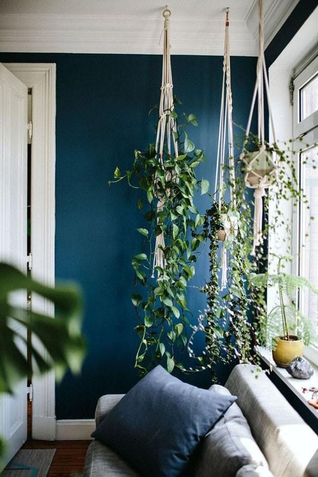 Plantas ornamentais: 12 dicas para ter um jardim em casa (Foto: Divulgação)
