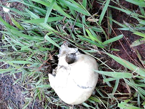 Crânio encontradao em matagal do Paranoá, no DF (Foto: Polícia Militar/Divulgação)