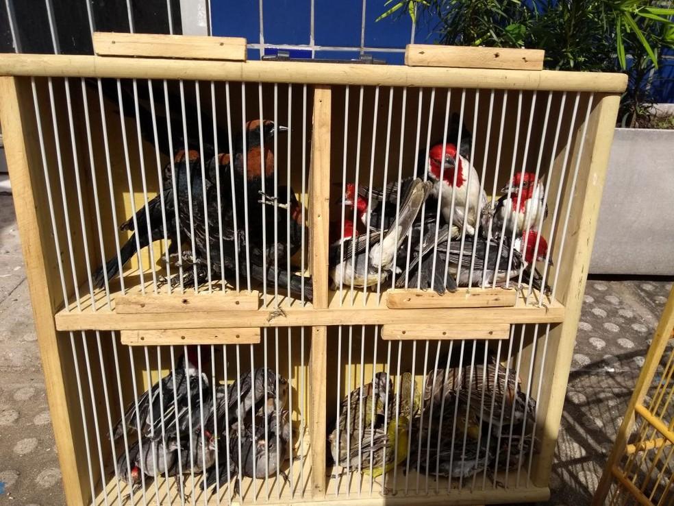 Aves foram aprrendidas durante operação em feira no município de Carpina, em Pernambuco (Foto: PMPE/Divulgação)