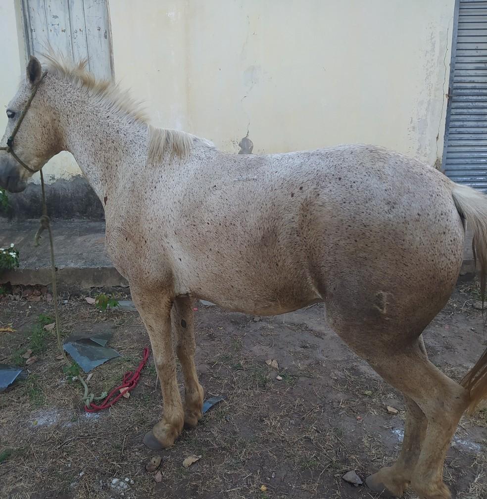 Suspeito por furtos de veículos é preso com cavalo furtado no Piauí — Foto: Polícia Militar