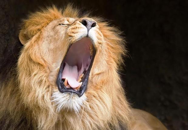 Leão ; imposto de renda ; IR ;  (Foto: Reprodução/YouTube)